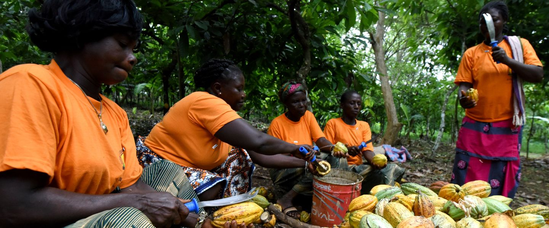 Le cacao durable enferme les producteurs dans la pauvreté
