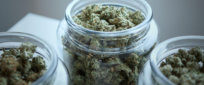 Fini de rire: le marché du cannabis s'effondre
