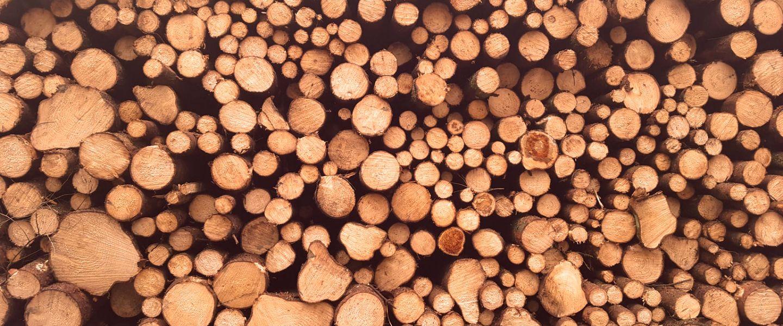 Le bois de rose, premier visé par le trafic international