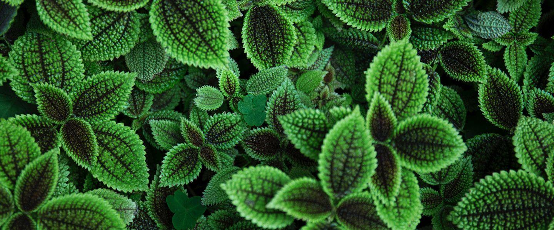 Vous pouvez désormais écouter la voix de vos plantes